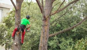 tree trimmer in asheville nc